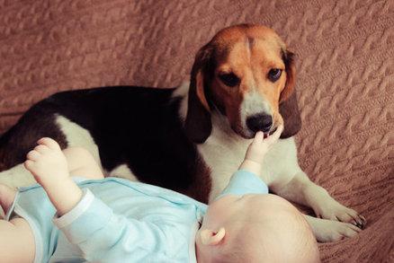 Nový člen smečky: Psi a kočky chrání novorozené děti, podívejte se
