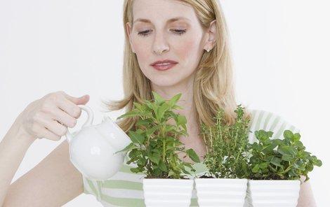 Bylinky vám provoní kuchyni a ještě udělají parádu, stačí jim dopřát dost světla a pravidelnou zálivku.