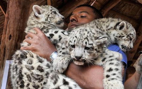 Kmotr měl s divokými »koťaty« plné ruce práce.