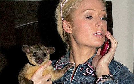 Paris Hilton a kinkažu. To je roztomilá potvůrka z čeledi medvídkovitých. Jenže umí být i pěkně divoká…