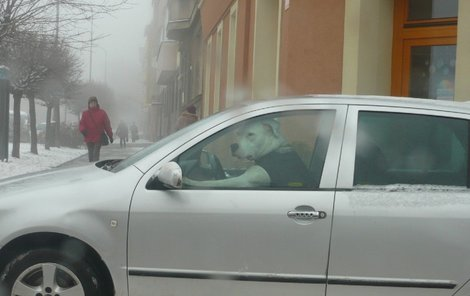 Za volantem auta seděl pes.