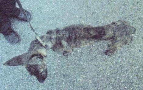 Psa málem utýrali k smrti.