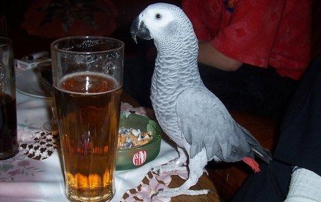 I když Robin s chutí pózuje u piva, nejraději má slunečnice, meloun a žloutek z vajíčka.
