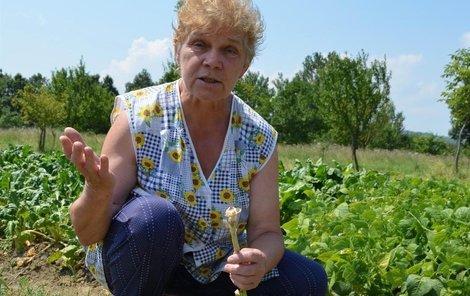 """""""Jen se podívejte, vždyť ten česnek nebyl ještě vůbec dozrálý,"""" říká nešťastně Jiřina Koníčková."""