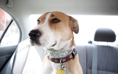 Pes v autě zachránil řidiče od pokuty.