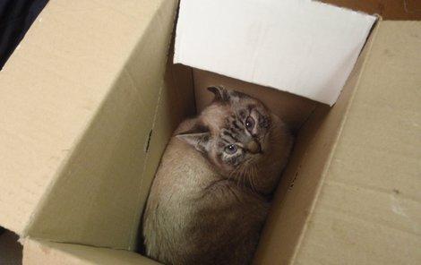 Lapené kočky vrhaly z krabic naštvané pohledy.