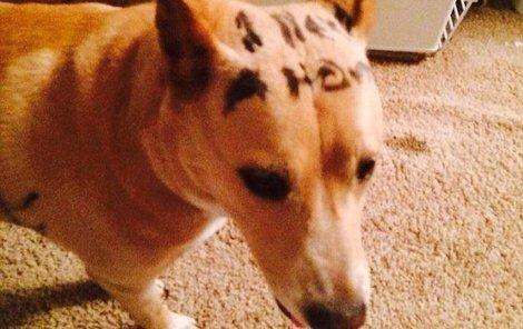 Pes se sám nabízel k adopci.