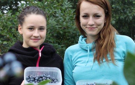 Kristýna a Klára sbírají borůvky do malých krabiček, nesmí se pomačkat.
