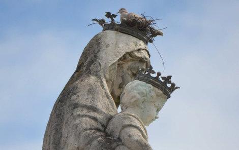 Vkorunce sochy Panny Marie hnízdí hrdličky.