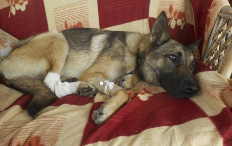 O týrané psy se v Rafaelu stará Iva Volková.