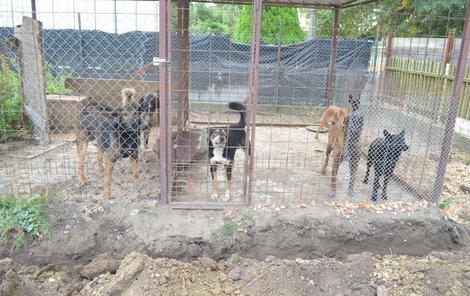 Psi dál zůstávají na pozemku.