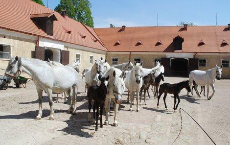 Hřebčín v Kladrubech nad Labem rozhodně stojí za návštěvu.