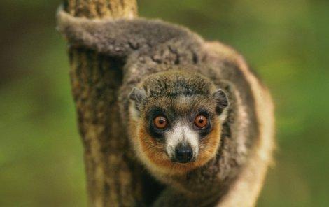 Ostravská zoo získala vzácný exemplář.