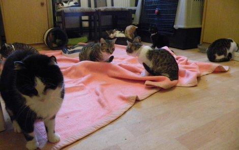 Provozní pokoj. Najdete tady 16 koťat i kočičky, které se doléčují po kastraci. Po doléčení míří mezi zdravé osazenstvo.