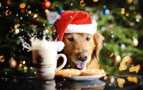 Pozor! Sváteční návštěvy přinášejí i větší pravděpodobnost zranění lidí. Pro psa není vzdálený příbuzný, který přijde na návštěvu jednou ročně, známou osobou. Je to vetřelec jako každý jiný, a to si děti a často ani dospělí neuvědomují.