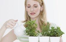 8 nejlepších bylinek na okenní parapet: Zdraví a chuť z květináče!