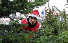 Vánoční strom: Co jste asi nevěděli?