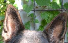 Pejskaři, pozor! Psy začal zabíjet tetanus!
