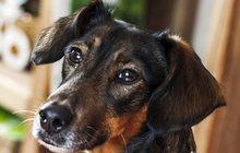 Nejlepší přítel člověka je plný překvapení! Co nevíte o svém psovi!