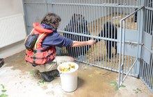 Skvělá zpráva zpovodní zničené pražské zoo: Gorily zůstanou doma!