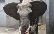 Bolest v zoo: Slonice ušlapala své mládě!