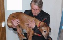 Tyran Rychtář? Gejše platí operace, jeho vlastní pes je prý nemocný a věčně zavřený!