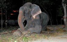 Po drsných 50ti letech v zajetí: Slon ronil slzy díků!