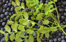 Lesní ovoce na talíři: Připravte teplý borůvkový svítek!