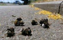 Nastal konec včelích medvídků? Hynou po stovkách... Víme, co je zabíjí!