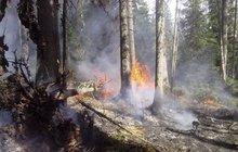 V srdci národního parku Šumava hořelo: Apokalypsa na Modravě!