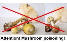 Běženci v Německu jedí i jedovaté houby: Syřan (†16) zemřel na otravu!