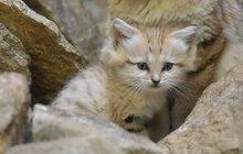 Koťátka z poušti poprvé vyrazila do světa!
