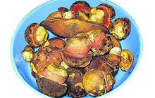 Z Česka je ráj houbařů: Kloubouky vystrkují i hříbky!