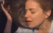 Žena zachránila šimpanze z laboratoře: Poznal ji i po 25 letech!