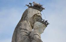 Ptačí hnízdo na hlavě Panny Marie!
