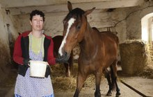 Týraný kůň měl 7 majitelů: Měnili ho za rum a cigarety!