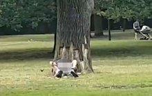 Sex ve veřejném parku! Diváci jen zírali!