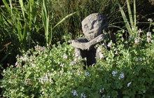 Magická léčivá zahrada: Jak ochránit okolí domu či chalupy!