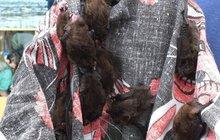 Odjeli na dovolenou a…50 netopýrů v bytě!