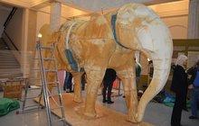 Slon Calvin zemřel, nyní ožívá v muzeu!