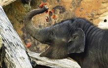 Sloní mimino poznává svět: Tak tohle je podzim?