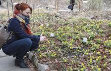 Jaro je tady... Kvetou sněženky, bledule i talovíny!