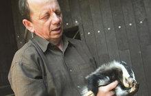 Školku lesních zvířátek v těchto dnech připomíná záchranná stanice v Bartošovicích na Novojičínsku. Starají se tam o malá srnčata, jezevce i kalouska.