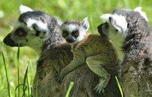 Ve zlínské zoo se chlubí raritou: Mají Brada (a) Pitta!