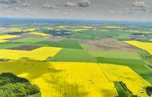 Ještě nikdy předtím nebyla česká pole žlutější! Řepkou olejkou letos bylo osázeno rekordních 407 tisíc hektarů, což je víc než pětina orné půdy v zemi. Zemědělcům se to vyplatí, výnosy z řepky jsou třeba proti pšenici až dvojnásobné. Jenže tahle kytička také škodí: vysává už dost tak vyprahlou půdu, způsobuje alergie, páchne a zabíjí zvěř.