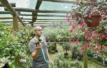 Jednu z největších sbírek fuchsií v Česku vystavuje pěstitel Jiří Pevný v Liberci. I přes to, že letošní jaro těmto květinám nepřálo, rostliny Pevnému krásně rozkvetly. Jeho výstavu můžete navštívit do konce srpna.