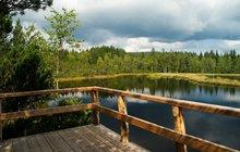 Šumava je jedním z nejstarších pohoří vEvropě, tvoří ji horniny prvohorního původu. Nejvyšší horou na české straně je Plechý, který se tyčí do výšky 1378 metrů nad mořem. Lesy plné hub, vzácných rostlin a živočichů a jezera ledovcového původu jsou hlavními důvody, proč byla oblast vyhlášena národním parkem a je chráněna rovněž jako biosférická rezervace UNESCO.