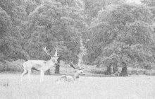 Vlastního syna (14) těžce zranil neopatrný účastník sobotního honu, který se konal v listopadu 1968 v katastru obce Kolíňany poblíž Nitry na západním Slovensku. Školáka zasáhly broky z otcovy brokovnice. Chlapec naštěstí přežil.