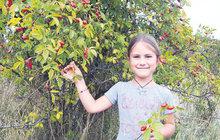 Podzim se nenápadně přiblížil: Už se červenají šípky i hloh!