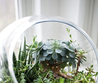 Objevte kokedamy, létající květináče a skleníky